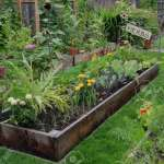 Personalized Health Garden Consultations